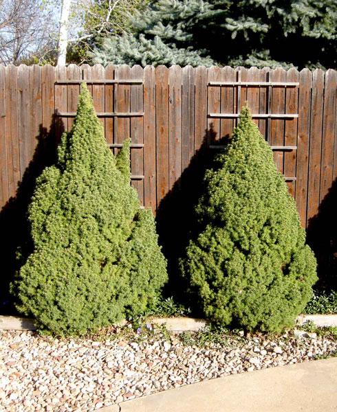 Spruce,-Alberta-web