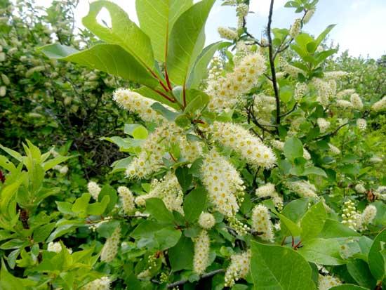 Colorado Health Insurance >> Fruit Trees | Boulder Tree