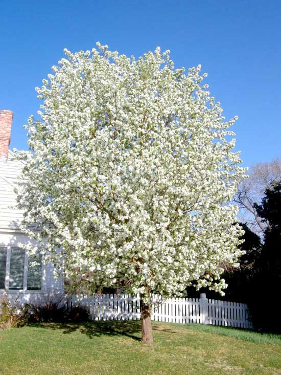 Colorado Health Insurance >> Fruit Trees   Boulder Tree