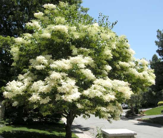 Colorado Health Insurance >> Small Trees   Boulder Tree