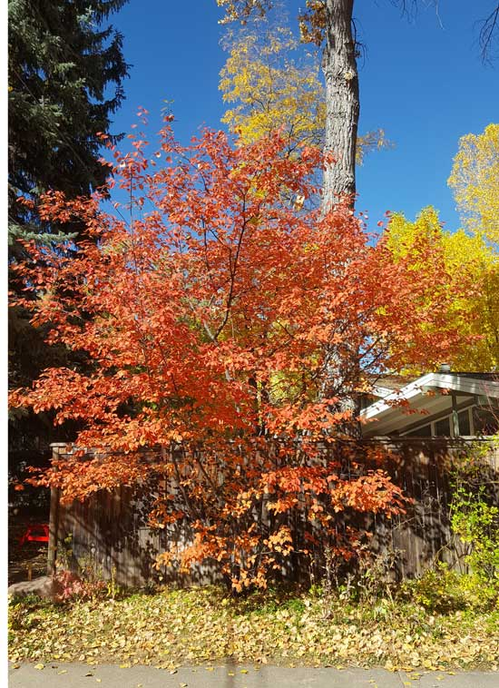 Colorado Health Insurance >> Small Trees | Boulder Tree